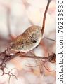 動物 小動物 倉鼠 76253536