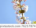 繡眼鳥 開花 花 76257874