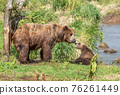 Female brown bear and her cub 76261449
