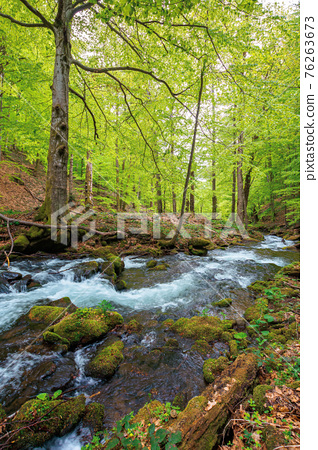 beautiful scene in a birch forest with river stream 76263673