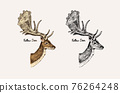 Horn and antlers Animals. Impala, gazelle and greater kudu, fallow deer reindeer, axis and dibatag 76264248