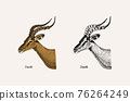 Horn and antlers Animals. Impala, gazelle and greater kudu, fallow deer reindeer, axis and dibatag 76264249