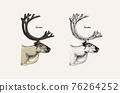 Horn and antlers Animals. Impala, gazelle and greater kudu, fallow deer reindeer, axis and dibatag 76264252