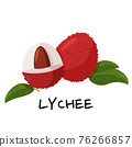 Tropical fruit lychee isolated on white background. Fresh exotic berry vector illustration. 76266857