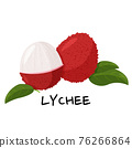 Tropical fruit lychee isolated on white background. Fresh exotic berry vector illustration. 76266864