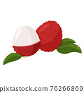 Tropical fruit lychee isolated on white background. Fresh exotic berry vector illustration. 76266869