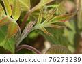 植物 植物學 植物的 76273289