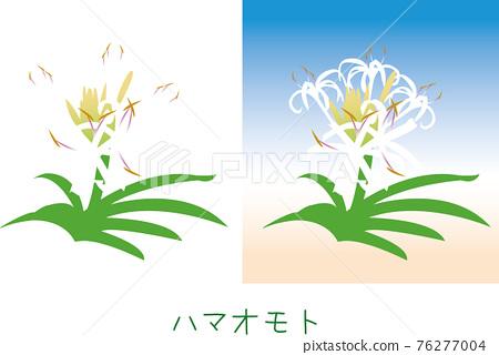 奄美 植物 植物學 76277004