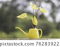 A type of caladium with yellow leaves in a yellow watering can 76283922