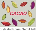 Cacao pod with beans freehand drawing on gray background. 76284348