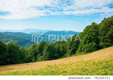 summer landscape of carpathian mountains. beautiful scenery in the morning. beech forest and grassy alpine meadows on the hills of chornohora ridge. bright sunny weather with fluffy clouds on the sky 76284352