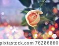 玫瑰 玫瑰花 花朵 76286860