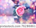 玫瑰 玫瑰花 花朵 76286861