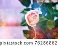 玫瑰 玫瑰花 花朵 76286862