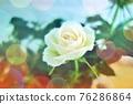 玫瑰 玫瑰花 花朵 76286864