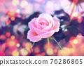 玫瑰 玫瑰花 花朵 76286865
