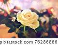 玫瑰 玫瑰花 花朵 76286866