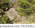 소나무, 나무, 수목 76293851