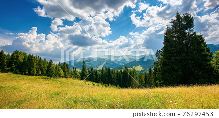 forest on the grassy meadow in mountains. beautiful countryside landscape on a sunny day. fluffy clouds on the blue sky above the distant borzhava ridge. summer adventures in carpathians 76297453