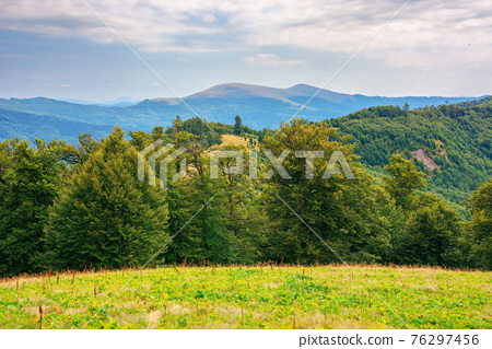 beech trees on the grassy hill. beautiful nature scenery in mountains. carpathian summer landscape in afternoon 76297456