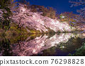 cherry blossoms at night, cherry trees in the evening, cherry blossom 76298828