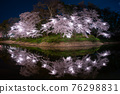 cherry blossoms at night, cherry trees in the evening, cherry blossom 76298831