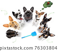 couple of dogs  with ticks, fleas 76303804