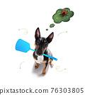dog with ticks and fleas 76303805