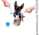 dog  at the dentist 76303810