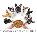 couple of dogs  with  food bowl 76303811