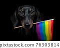 gay pride dog 76303814