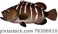 矢量 魚 鹹水魚 76306010