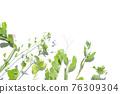 花 植物 框架 76309304