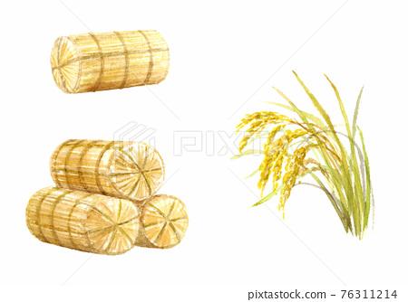 쌀 가마니와 벼 세트 수채화 76311214