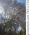 tree, spring, timber 76311720