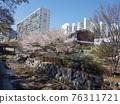 spring, Flower, cherry blossom 76311721