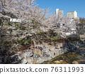 Flower, cherry blossom, Cherry Blossom 76311993
