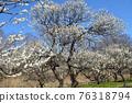 후추시 향토의 숲 박물관 매화 푸른 하늘 76318794