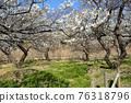 후추시 향토의 숲 박물관 매화 푸른 하늘 76318796