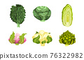 Different Cabbage with Cauliflower and Romanesco Broccoli Vector Set 76322982