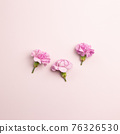 Pink carnation flowers on pink background. flat lay, top view, copy space 76326530