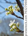 玫瑰花 玫瑰 水果 76327060