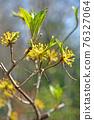 樹:三生家族 76327064