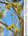 樹:三生家族 76327065