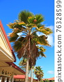 palm tree, palm, coconut palm 76328599
