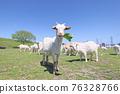 山羊放牧 76328766