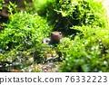 newt, amphibian, amphibians 76332223