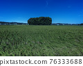 grand shrine at ise, ear of rice, paddy field 76333688