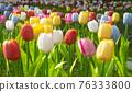 tulip 76333800