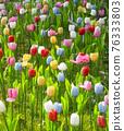 tulip 76333803